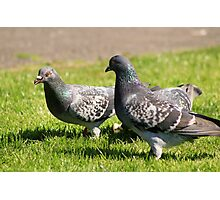 Pigeons in the park Photographic Print