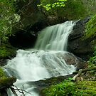 Upper staire creek 2 by Forrest Tainio