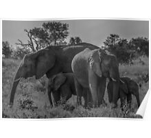 Elephant Family of Four Poster