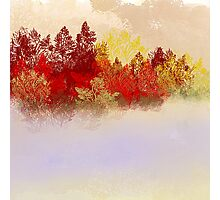 The Red Trees Photographic Print