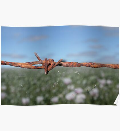 ......barbed Poster