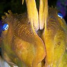 Giant Cuttlefish - Defensive by Melissa Fiene