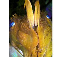 Giant Cuttlefish - Defensive Photographic Print