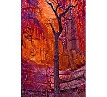 Zions Crimson Cliffs Photographic Print