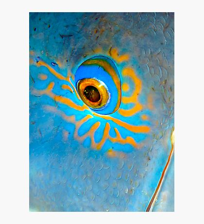 Blue Grouper Eye Photographic Print