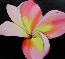 Pink Frangipani by Laura Dhir