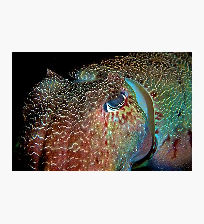 Giant Cuttlefish Photographic Print