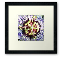 Close Up of The Centre Of a Passiflora Flower Framed Print