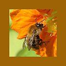 Nasturtium Bee by Gilberte