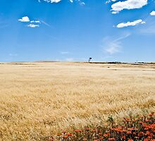 Colourful field by thorpee