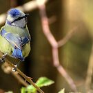 Blue tit by larry flewers