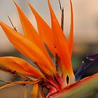 Bird Of Paradise by Deborah Hilton