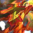 Autumn Sunshine by Luke and Katie Thurlby