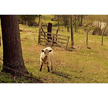 """""""Keeper of the Gate""""... prints and products Photographic Print"""