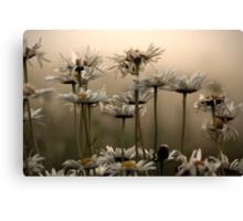 Daisies In The Fog Canvas Print