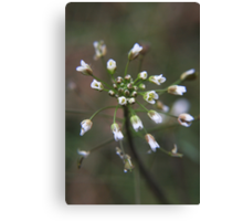 Strange wild flower Canvas Print