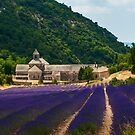 Lavender Field in Sénanque Abbey, Vaucluse-Provence, France by Yen Baet