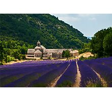 Lavender Field in Sénanque Abbey, Vaucluse-Provence, France Photographic Print
