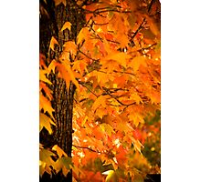 Autumnal colours in Stirling Photographic Print