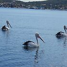 Pelican Parade by KazM