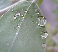 Dew Drops by Tom Clancy