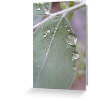 Dew Drops Greeting Card