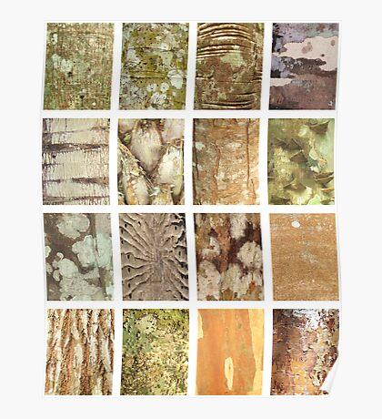 bark study Poster