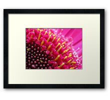 Candles in the Gerbera Framed Print