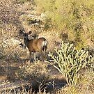Deer wonder by Bonnie Pelton