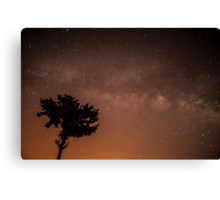 Starry Night. tree silhouetted on a star filled night  Canvas Print