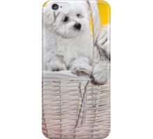 Two cute white puppies in white basket on orange and yellow background  iPhone Case/Skin
