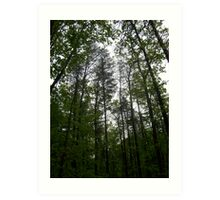 Prince William National Forest 1 Art Print