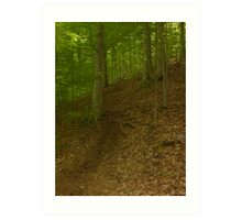Prince William National Forest 2 Art Print