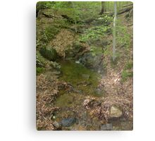 Prince William National Forest 5 Metal Print