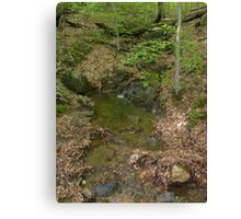 Prince William National Forest 5 Canvas Print