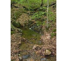 Prince William National Forest 5 Photographic Print