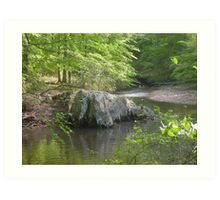 Prince William National Forest 6 Art Print