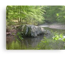 Prince William National Forest 6 Metal Print