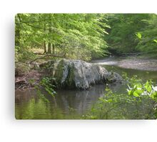 Prince William National Forest 6 Canvas Print