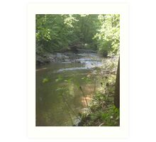 Prince William National Forest 10 Art Print