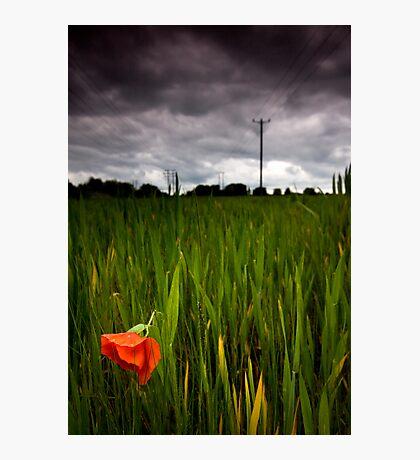 lone poppy Photographic Print