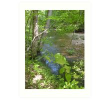 Prince William National Forest 8 Art Print