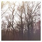 Forest Trees by Rosalind5