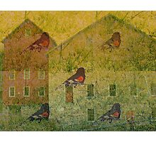 Redwing                        Photographic Print
