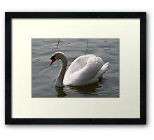whiteness Framed Print