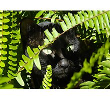 Black cat in ferns Photographic Print