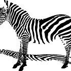 Shadow of Zebra by SofiaYoushi