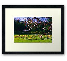 Sakura (2) Framed Print