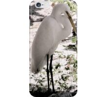 Egret at the Sunken Gardens in Florida iPhone Case/Skin