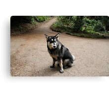 Where is that Riding Hood! Canvas Print